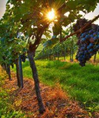 Vinařství Flajšinger